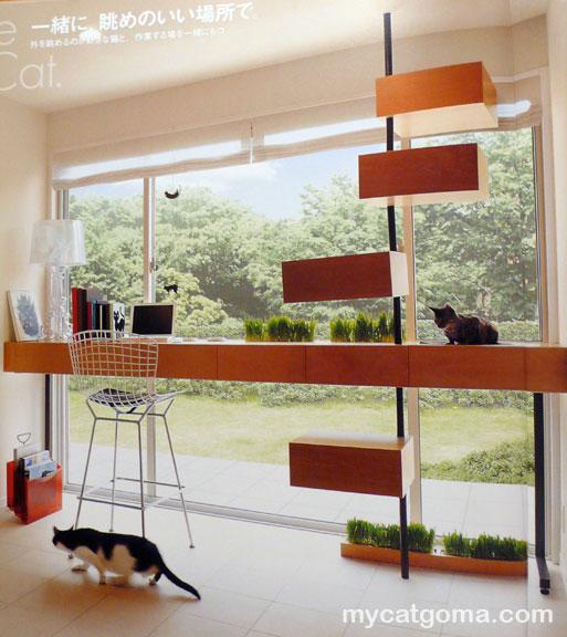 bezpieczny dom dla kota