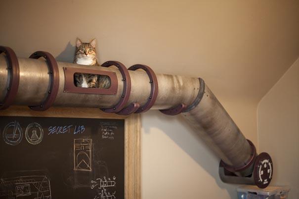 koty w mieszkaniu